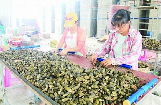 海南槟榔加工