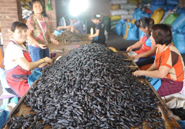 11月23日,琼海市万泉镇的群众高兴地挑拣槟榔果。