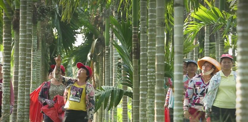 这颗好槟榔口味王要定了!4.8亿投资万宁槟榔全产业链